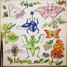 Bug sheet,2016