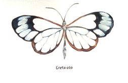 gretaoto