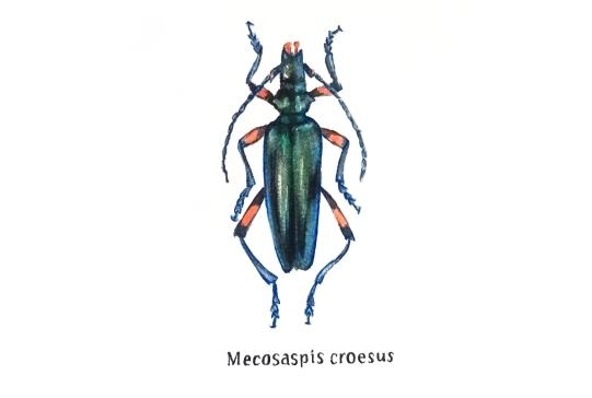 mecosaspis